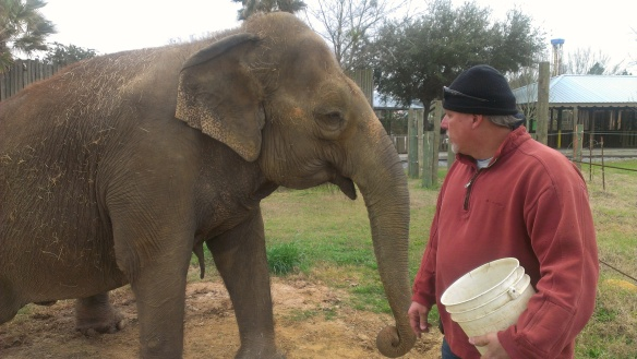 Chris with his elephant at Wild Adventures in Valdosta, Ga.