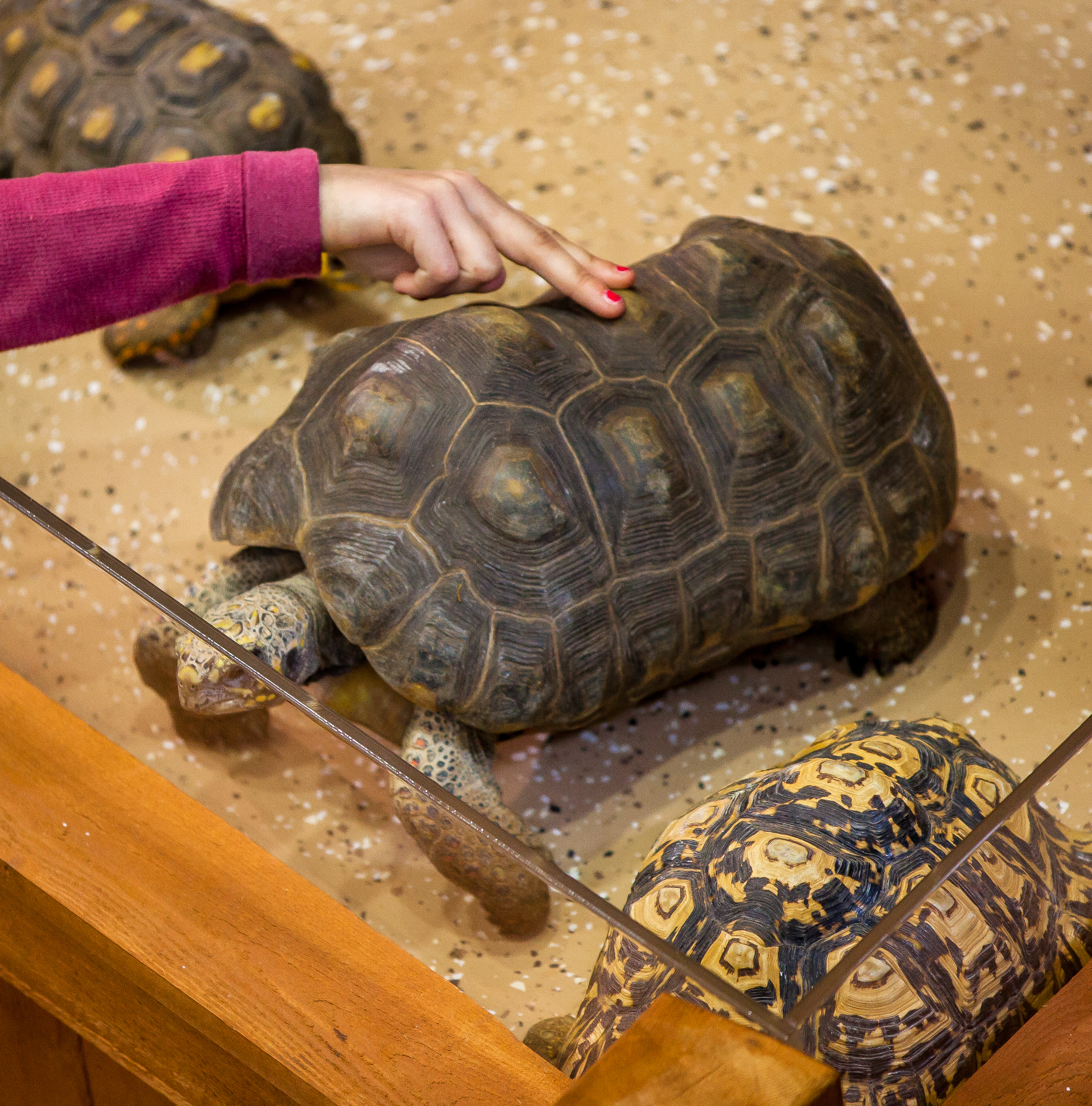 Touching Moment at Newport Aquarium?s Turtle Canyon