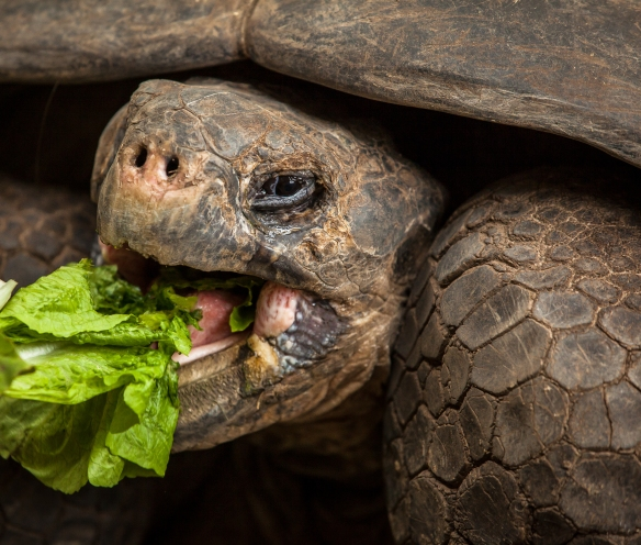 Newport_Aquarium_Turtle_Canyon_HR-1526