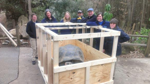 Bravo with Riverbanks Zoo and Newport Aquarium staff. The crate was filled with hay to protect Bravo from sliding back and forth before the drive back to Newport.