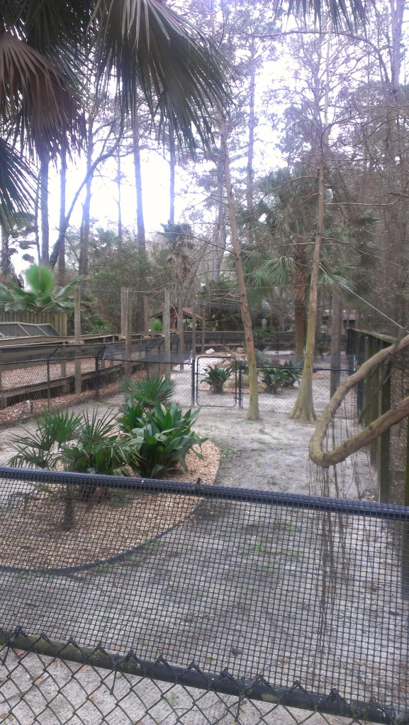 This is one of the options for an exhibit space that our white gators might be moving to. A very tropical looking exhibit!