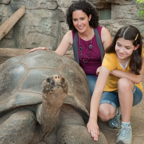 Our VIP Bravo Experience allows guest to get up close and personal with our 650-pound Galapagos tortoise.