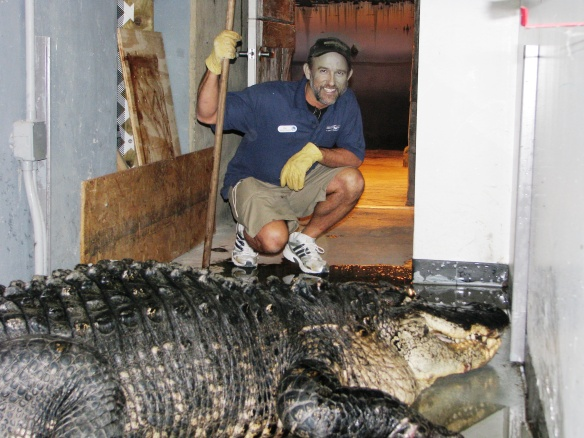 Ric Urban behind the scenes of the Gator Alley exhibit with Mighty Mike.