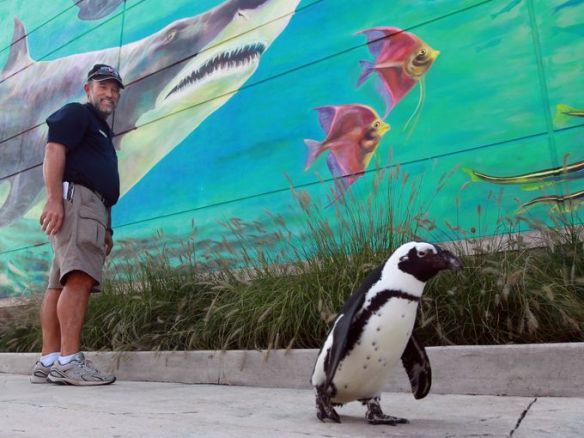Animal Ambassador Ric Urban with Paula the penguin (The Enquirer/Patrick Reddy)
