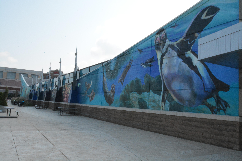 Newport Aquarium Celebrates Shark Week By Unveiling 35