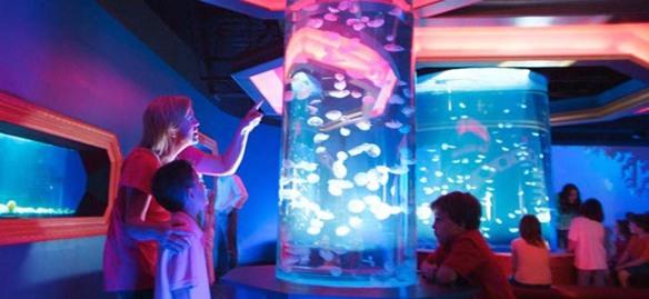 JellyfishGallery