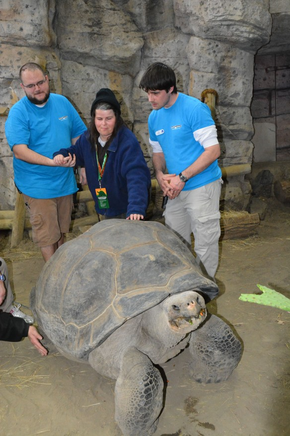 Michelle Ridder (center) touches the shell of Bravo the Galapagos tortoise as Newport Aquarium exhibits staffers Kevin Sommerkamp (left) and Will Gosnell (right) assist.