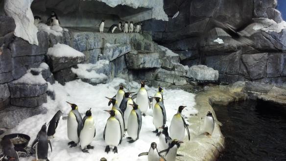Kroger Penguin Palooza