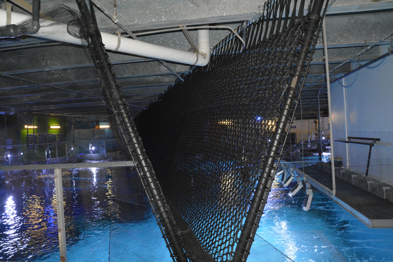 Fish tank sharks - Dsc_6908