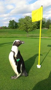 Green Bean on golf course