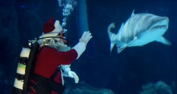 Scuba Santa greets kids while diving in the Surrounded by Sharks exhibit.