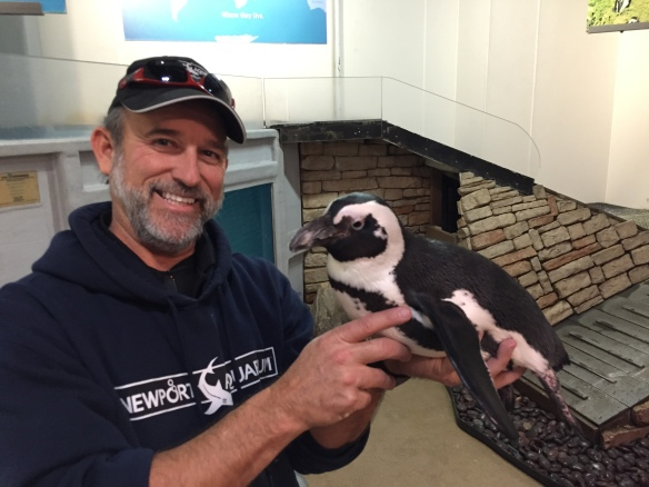 Ric Urban, Chief Conservation Officer, holding Paula, one of Newport Aquarium's African penguins.