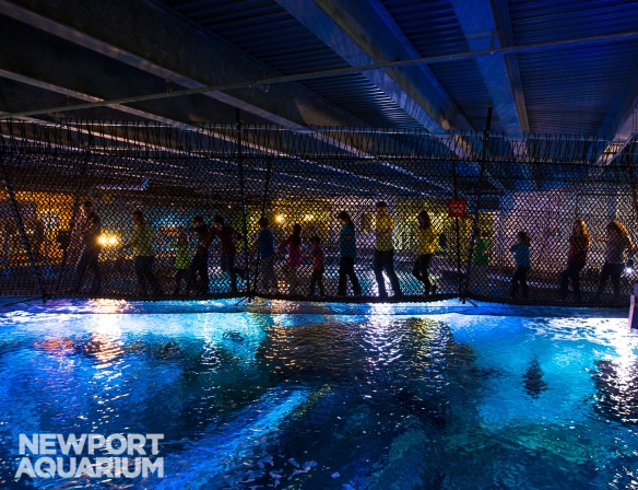 Newport_Aquarium_Shark_Bridge_HR_--¼2015_Steve_Ziegelmeyer-0799