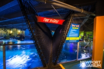 Newport_Aquarium_Shark_Bridge_HR_--¼2015_Steve_Ziegelmeyer-9741