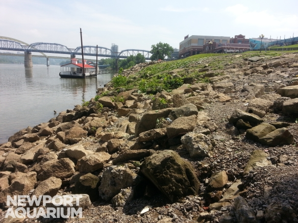 Ohio River  bank