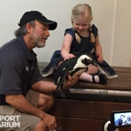 Chief Conservation Officer, Ric Urban, with a young visitor on a Penguin Encounter in the African penguin house.