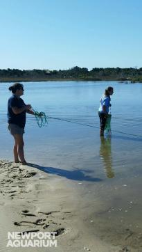 Jen has her feet in the sand, helps gather salt marsh fish at Shackleford Banks.
