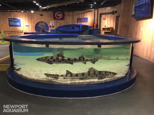 Shark Central