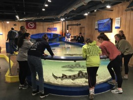 Shark Central 2017