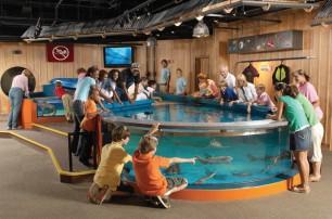 Shark Central 2006