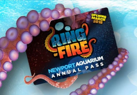 Ring of Fire Buy 3 Get 1 Free