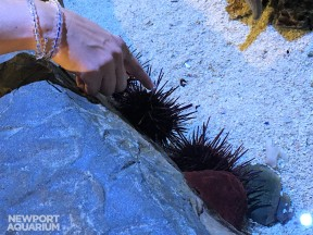 Touching Purple Urchin