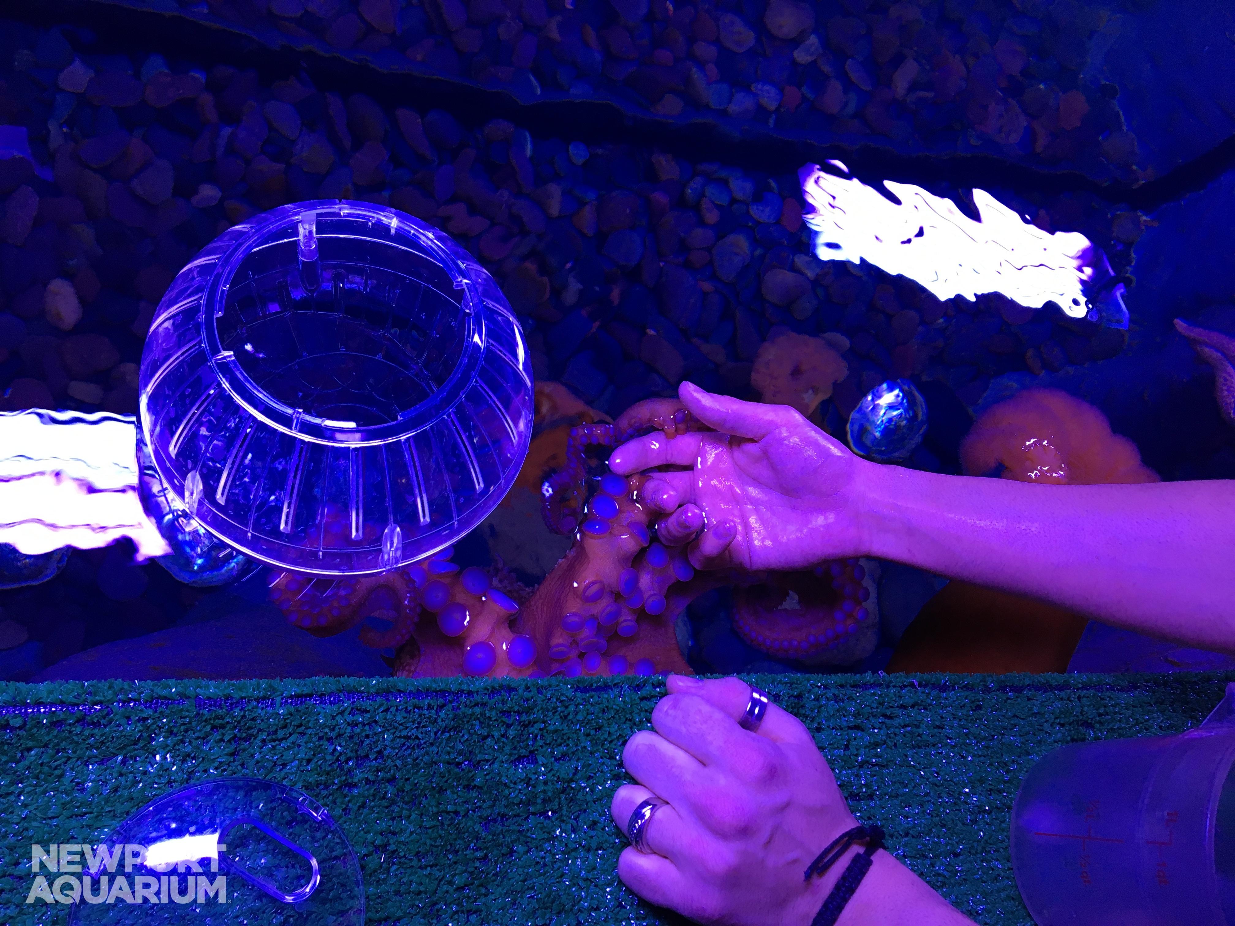 Aquarium Works