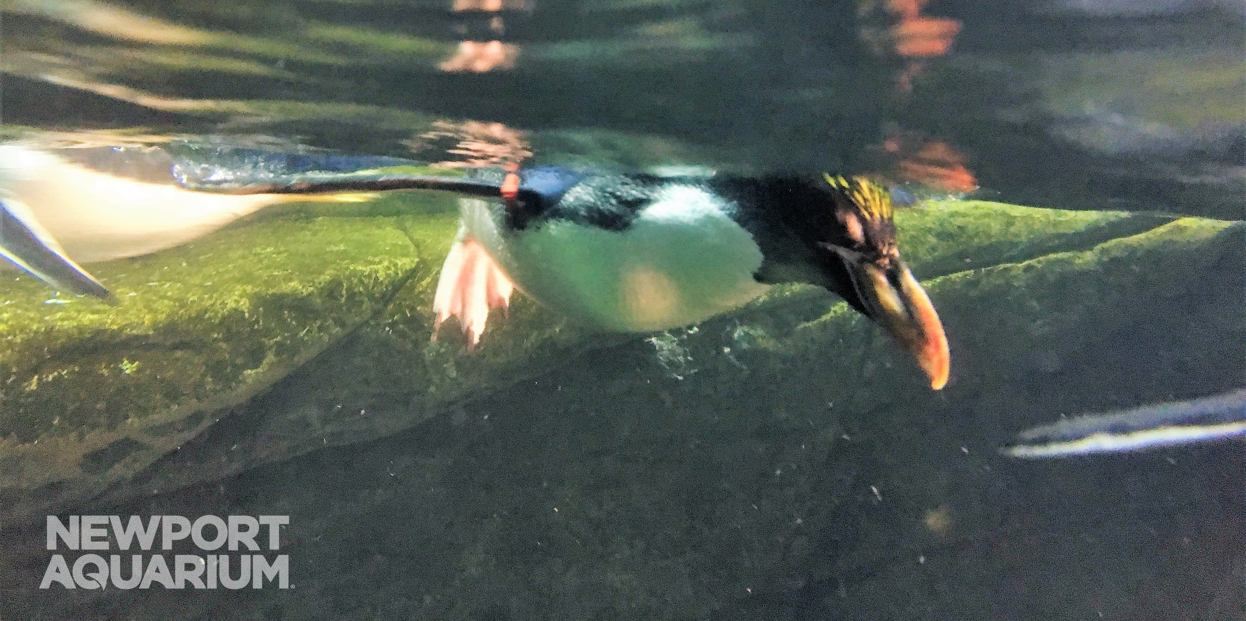 newport aquarium animal caretakers rally behind paralyzed penguin