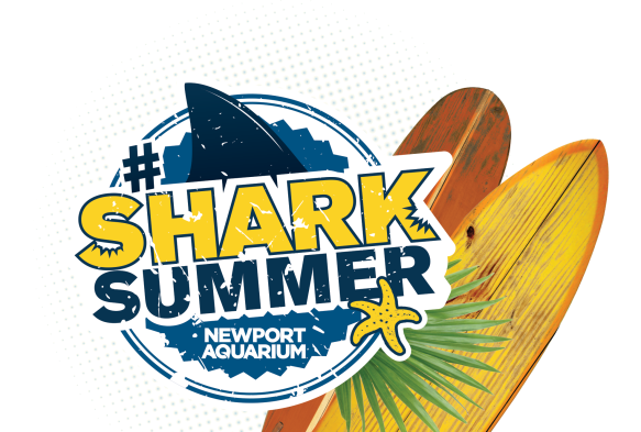 02SharkSummerLogoWithSurfBoards_PNG - Copy