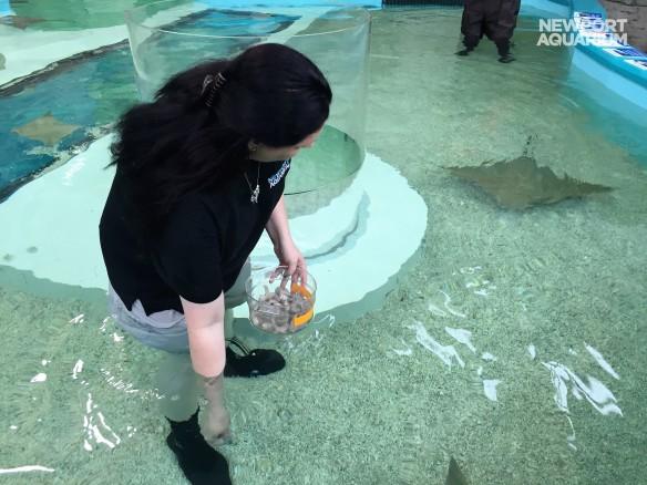 Feeding stingrays (2)