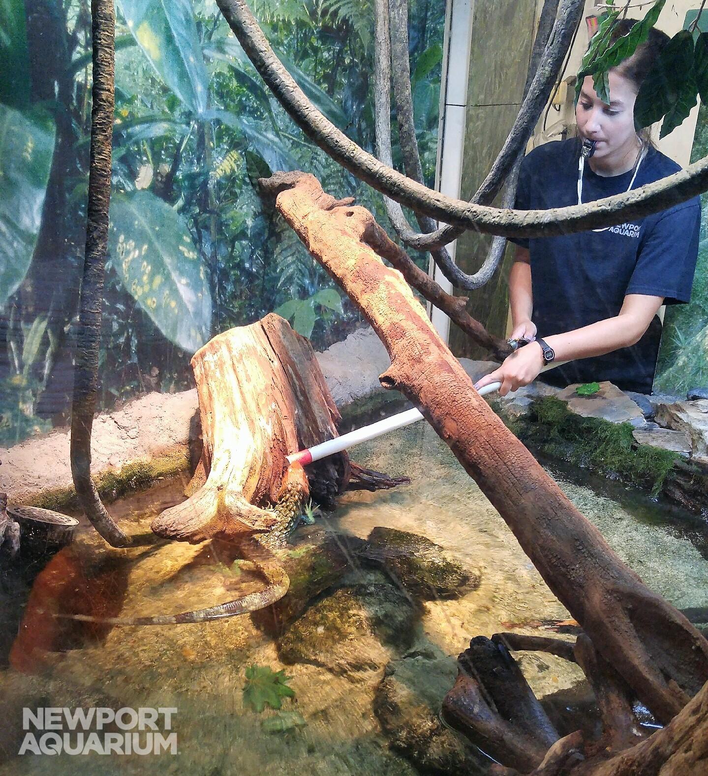 Kelly feeding caiman (2)