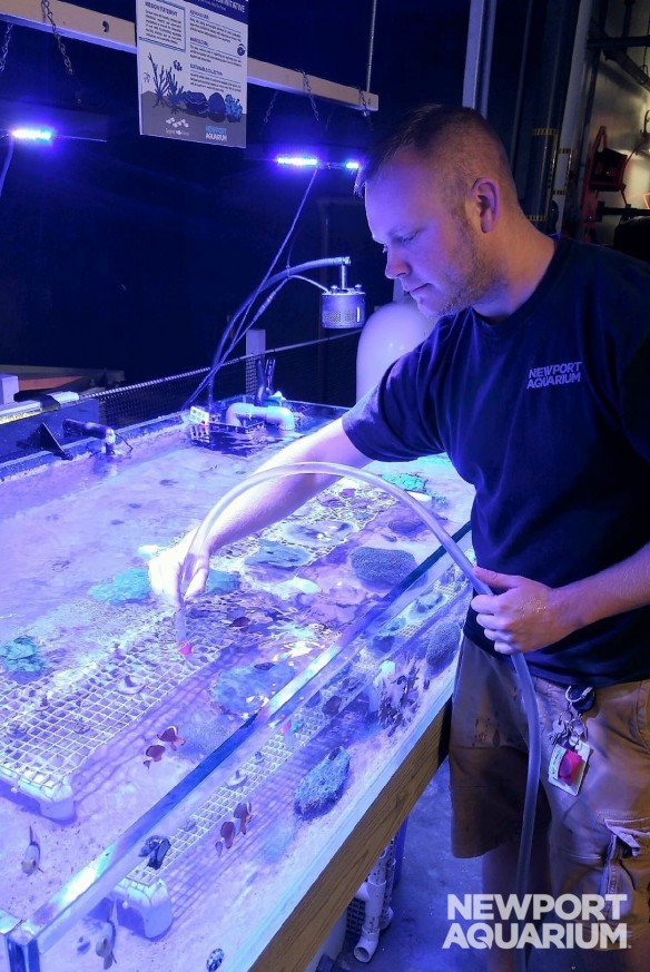 Rob cleaning coral (2)