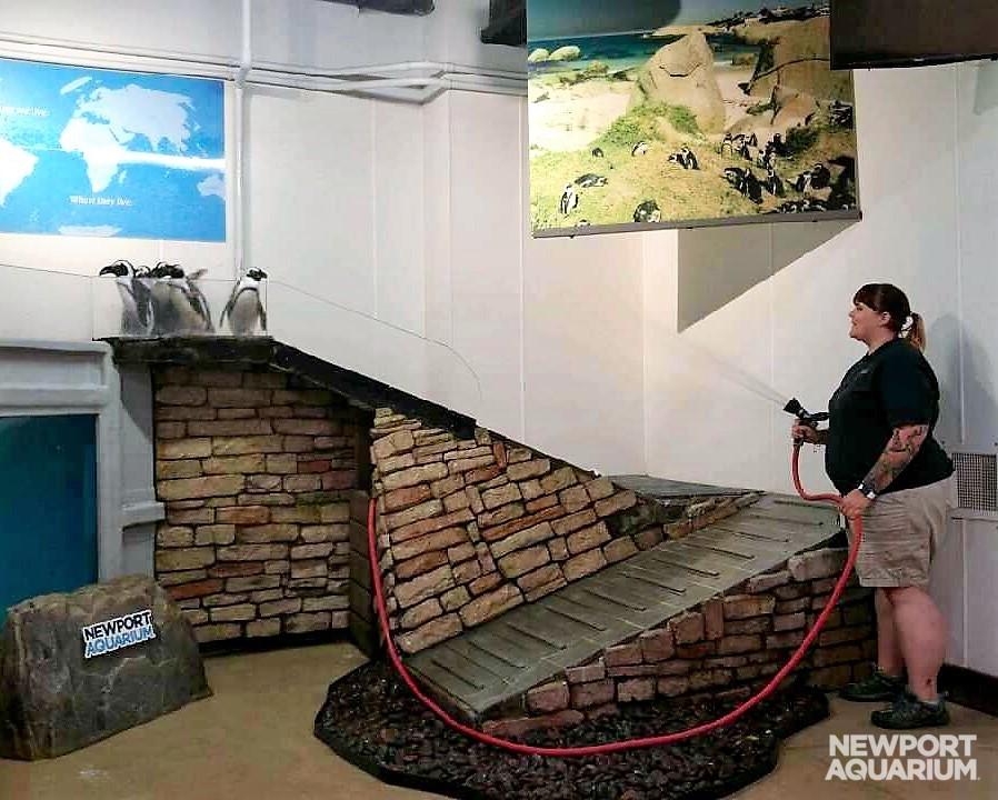 Tamara penguin house (2)