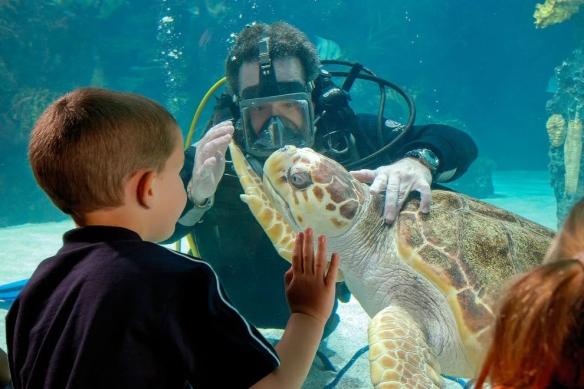 Newport-Aquarium_54_990x660