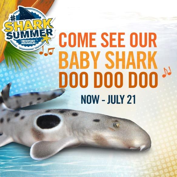SharkSummer_BabyShark_1080